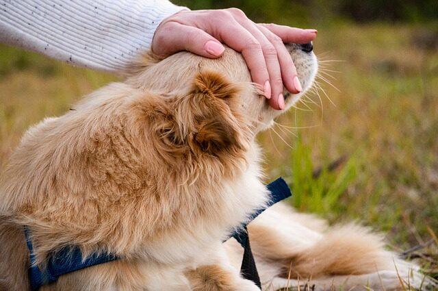 最近、犬が近くに寄ってくる。自分次第で、相手も場の空気も変えられる。